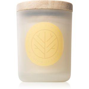 DW Home Vanilla & Raw Honey vonná sviečka s dreveným knotom 107,73 g